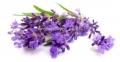 Lavendel - Aroma für E-Liquids - QF