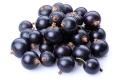 Johannisbeere (schwarz) (Cassis) - Aroma für E-Liquids - IW