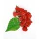 RasPi - Aroma für E-Liquids - HER