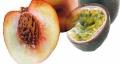 Pfirsich-Maracuja - Aroma für E-Liquids - HER