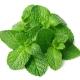 Spearmint - Aroma für E-Liquids - TPA