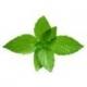 Cool Mint (Eisbonbon) - Aroma für E-Liquids - IW